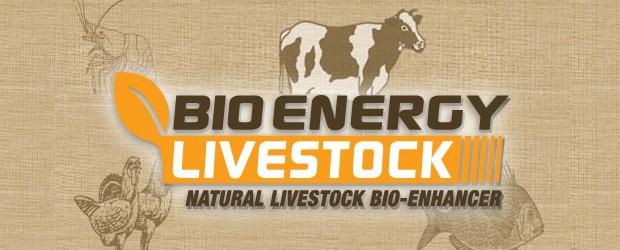 livestock02-620